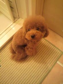 愛犬鈴ちゃん~トイプードル☆ライフスタイル~-2011082916560000.jpg