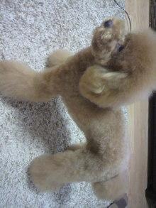 愛犬鈴ちゃん~トイプードル☆ライフスタイル~-2011082917470000.jpg