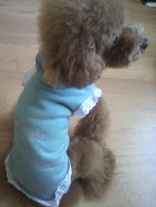 愛犬鈴ちゃん~トイプードル☆ライフスタイル~-2011083008300000.jpg