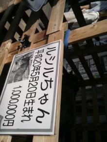 愛犬鈴ちゃん~トイプードル☆ライフスタイル~-2011083013220000.jpg