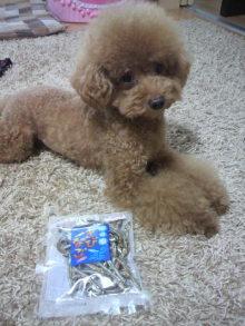 愛犬鈴ちゃん~トイプードル☆ライフスタイル~-2011083017110000.jpg