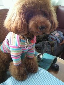 愛犬鈴ちゃん~トイプードル☆ライフスタイル~-2011083015020002.jpg