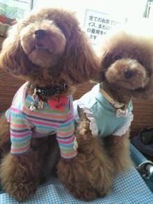 愛犬鈴ちゃん~トイプードル☆ライフスタイル~-2011083015010000.jpg