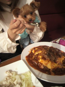 愛犬鈴ちゃん~トイプードル☆ライフスタイル~-2011083015260002.jpg