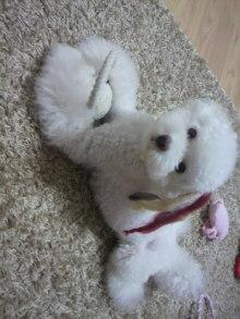 愛犬鈴ちゃん~トイプードル☆ライフスタイル~-2011090522050000.jpg