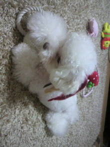 愛犬鈴ちゃん~トイプードル☆ライフスタイル~-2011090522060002.jpg
