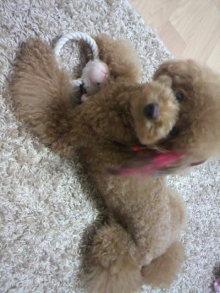 愛犬鈴ちゃん~トイプードル☆ライフスタイル~-2011090522090001.jpg