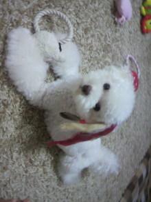 愛犬鈴ちゃん~トイプードル☆ライフスタイル~-2011090522060000.jpg