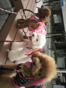 愛犬鈴ちゃん~トイプードル☆ライフスタイル~-2011090613370000.jpg
