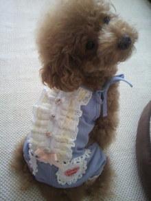 愛犬鈴ちゃん~トイプードル☆ライフスタイル~-2011091511340000.jpg