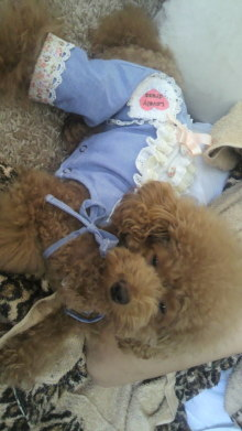 愛犬鈴ちゃん~トイプードル☆ライフスタイル~-2011091511560000.jpg