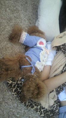 愛犬鈴ちゃん~トイプードル☆ライフスタイル~-2011091511570000.jpg