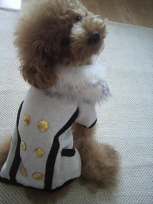 愛犬鈴ちゃん~トイプードル☆ライフスタイル~-2011091913000000.jpg