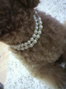 愛犬鈴ちゃん~トイプードル☆ライフスタイル~-2011091916470000.jpg