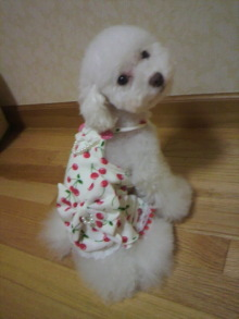 愛犬鈴ちゃん~トイプードル☆ライフスタイル~-2011092021510000.jpg