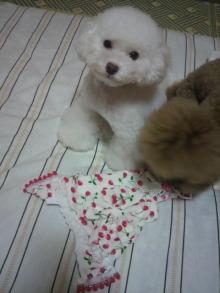 愛犬鈴ちゃん~トイプードル☆ライフスタイル~-2011092021500000.jpg
