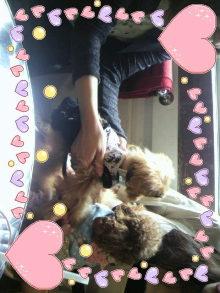 愛犬鈴ちゃん~トイプードル☆ライフスタイル~-2011092213200000.jpg