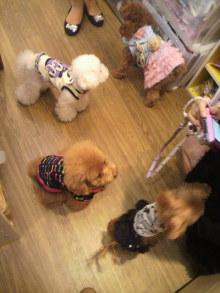 愛犬鈴ちゃん~トイプードル☆ライフスタイル~-2011092215220000.jpg