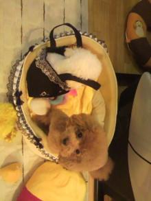 愛犬鈴ちゃん~トイプードル☆ライフスタイル~-2011092217000001.jpg