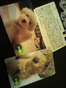 愛犬鈴ちゃん~トイプードル☆ライフスタイル~-2011092217120000.jpg