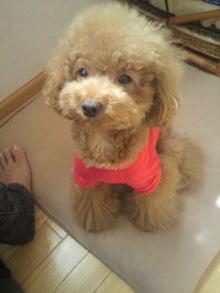 愛犬鈴ちゃん~トイプードル☆ライフスタイル~-2011092411420000.jpg