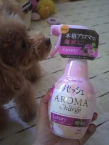 愛犬鈴ちゃん~トイプードル☆ライフスタイル~-2011092816460000.jpg