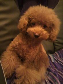 愛犬鈴ちゃん~トイプードル☆ライフスタイル~-2011092821230002.jpg