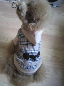 愛犬鈴ちゃん~トイプードル☆ライフスタイル~-2011093014590000.jpg