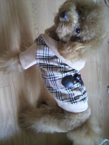 愛犬鈴ちゃん~トイプードル☆ライフスタイル~-2011093014590001.jpg