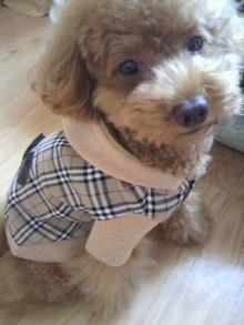 愛犬鈴ちゃん~トイプードル☆ライフスタイル~-2011093015000000.jpg