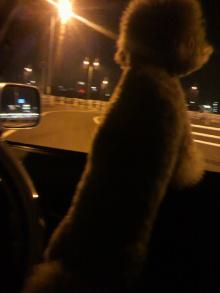 愛犬鈴ちゃん~トイプードル☆ライフスタイル~-2011093019110000.jpg