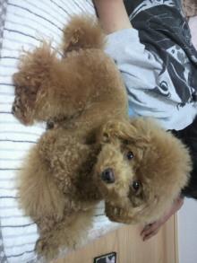 愛犬鈴ちゃん~トイプードル☆ライフスタイル~-2011093022160000.jpg