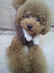 愛犬鈴ちゃん~トイプードル☆ライフスタイル~-2011100415060002.jpg