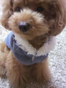 愛犬鈴ちゃん~トイプードル☆ライフスタイル~-2011100519250001.jpg