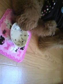 愛犬鈴ちゃん~トイプードル☆ライフスタイル~-2011100714560004.jpg