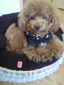 愛犬鈴ちゃん~トイプードル☆ライフスタイル~-2011100715090001.jpg