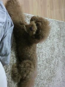 愛犬鈴ちゃん~トイプードル☆ライフスタイル~-2011101019460000.jpg