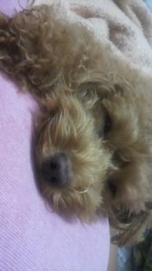 愛犬鈴ちゃん~トイプードル☆ライフスタイル~-2011101100360000.jpg