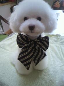 愛犬鈴ちゃん~トイプードル☆ライフスタイル~-2011101211110000.jpg