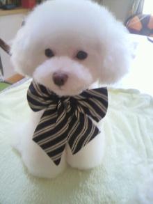 愛犬鈴ちゃん~トイプードル☆ライフスタイル~-2011101211120000.jpg