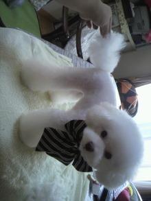 愛犬鈴ちゃん~トイプードル☆ライフスタイル~-2011101211100002.jpg