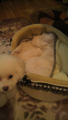 愛犬鈴ちゃん~トイプードル☆ライフスタイル~-2011101220590000.jpg