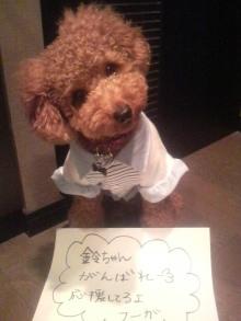 愛犬鈴ちゃん~トイプードル☆ライフスタイル~-2011101309540002.jpg
