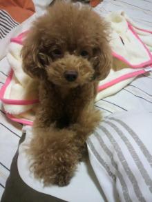 愛犬鈴ちゃん~トイプードル☆ライフスタイル~-2011101419520000.jpg
