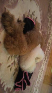 愛犬鈴ちゃん~トイプードル☆ライフスタイル~-2011101421260000.jpg