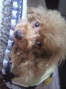 愛犬鈴ちゃん~トイプードル☆ライフスタイル~-2011101513170001.jpg