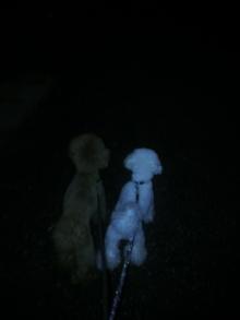 愛犬鈴ちゃん~トイプードル☆ライフスタイル~-2011101518420000.jpg
