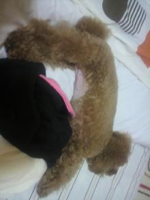 愛犬鈴ちゃん~トイプードル☆ライフスタイル~-2011101523260001.jpg