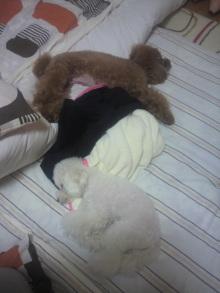 愛犬鈴ちゃん~トイプードル☆ライフスタイル~-2011101523250000.jpg