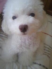 愛犬鈴ちゃん~トイプードル☆ライフスタイル~-2011101710120001.jpg